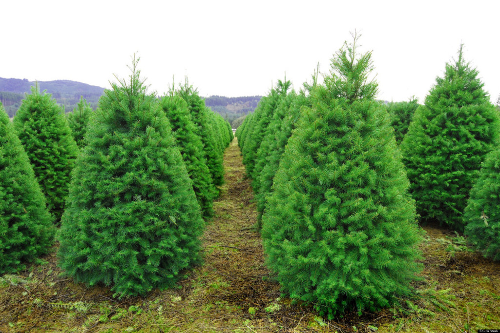 o-CHRISTMAS-TREE-FARM-facebook